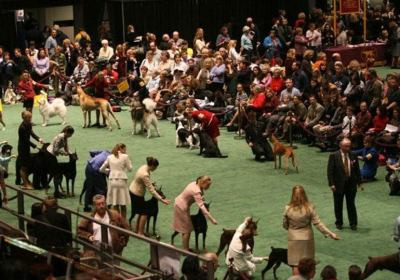 Questions About Dog Shows